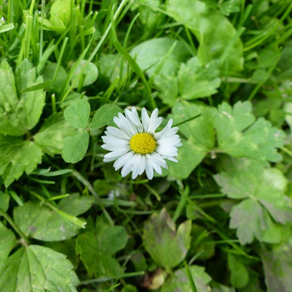 découverte plantes sauvages comestibles Lille