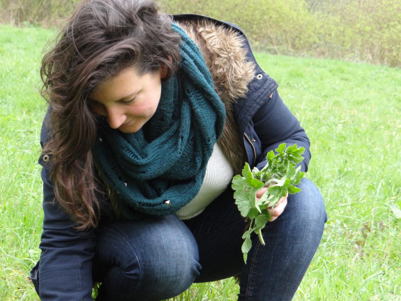 cueillette de plantes sauvages du printemps
